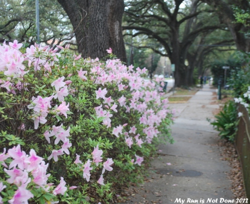 flowers, Garden District